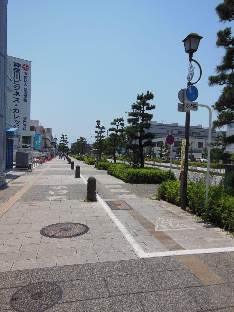 平塚市・黒松並木道
