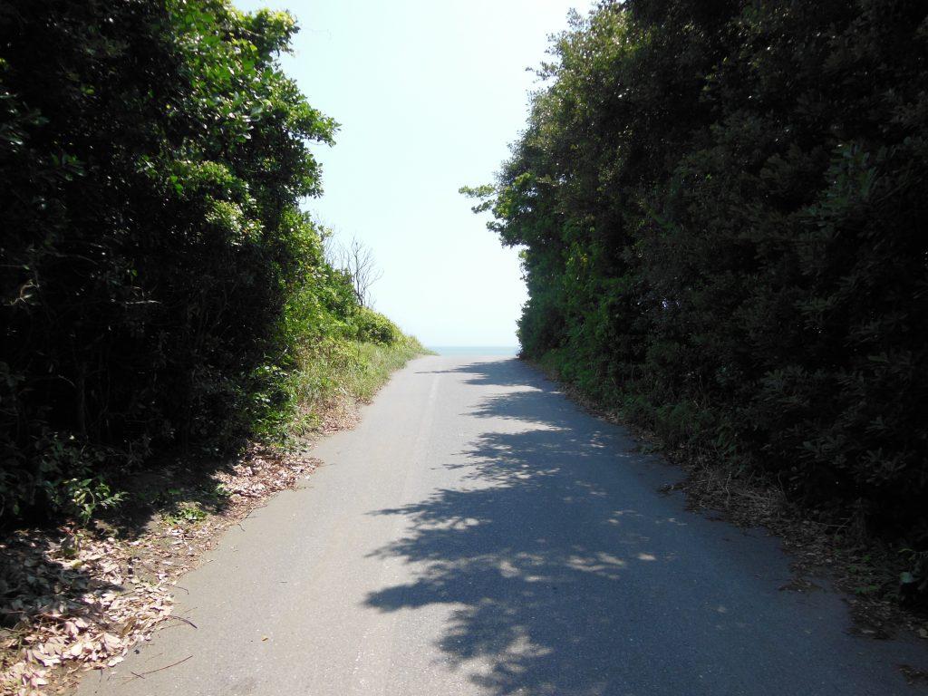 柳島海岸への小道