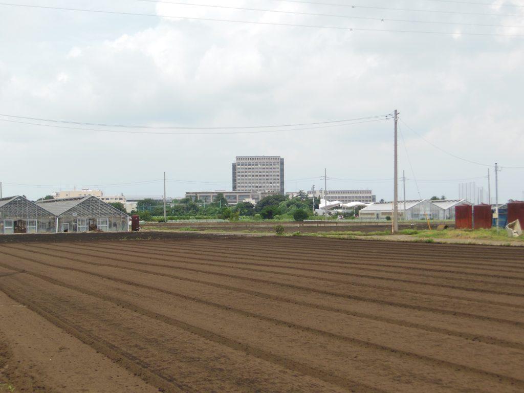 藤沢の畑と日大キャンパス