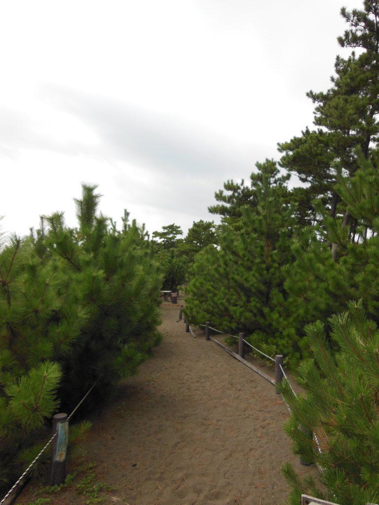 美しい松林が広がるこゆるぎ緑地