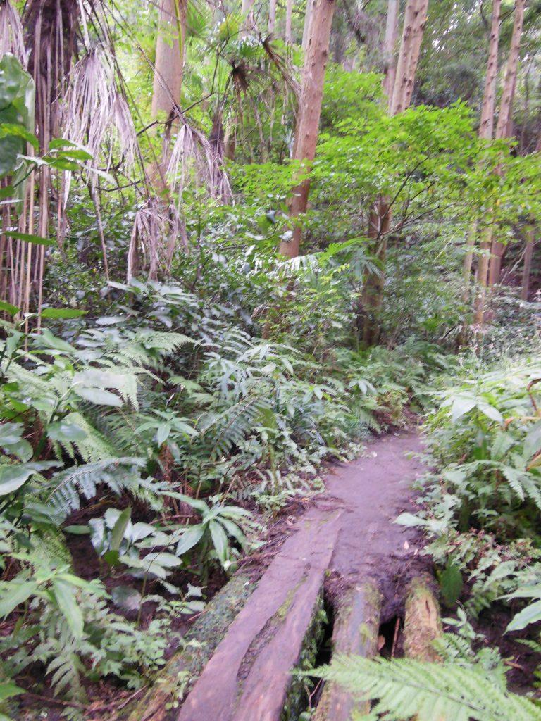 衣張山登山道には自然が溢れる