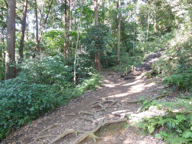 杉の木立が奥に見える急坂ポイントを追加する
