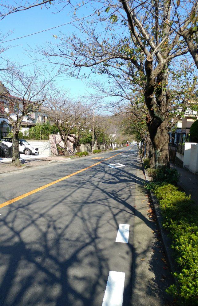 久木地区の桜間並木