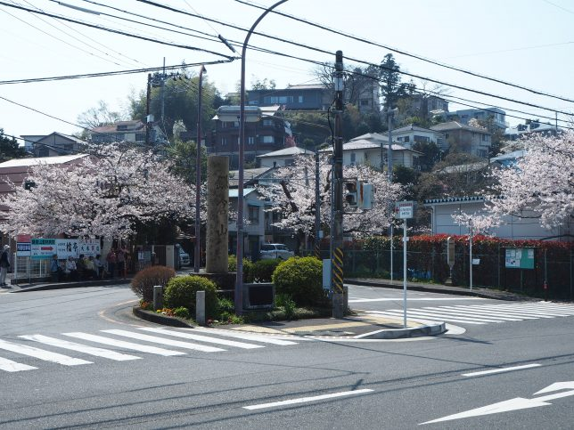鎌倉山バス停付近の桜