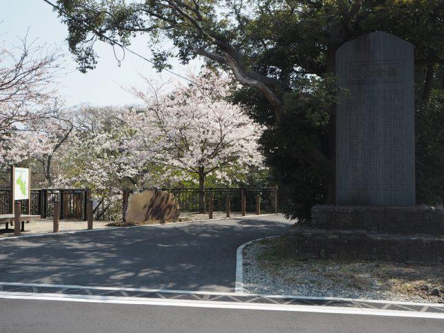 夫婦池公園入り口の桜