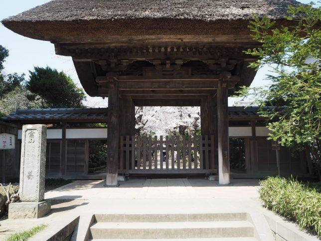 極楽寺山門と桜