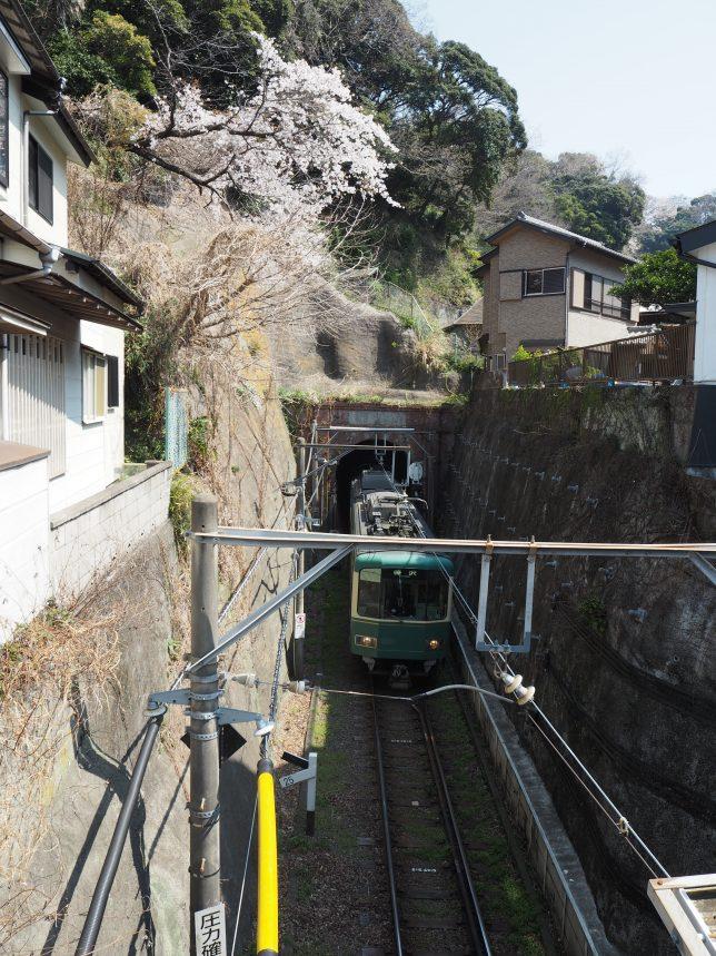 極楽洞と江ノ電と桜