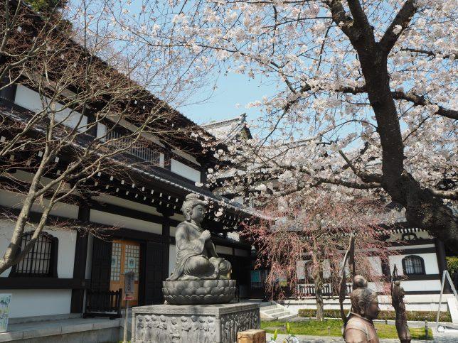 長谷寺の仏像と桜