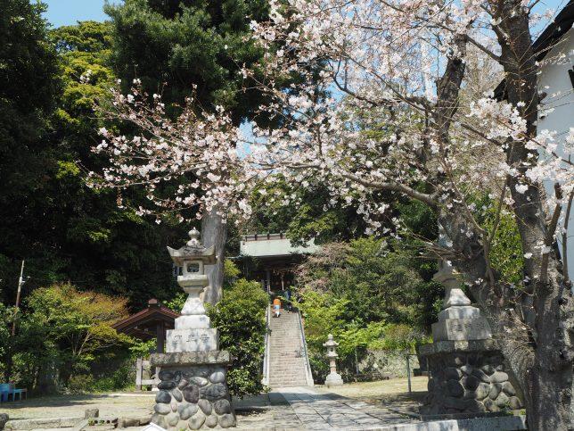 甘縄神明神社の桜