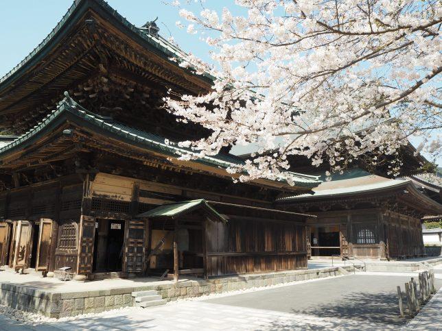 建長寺の仏殿と桜
