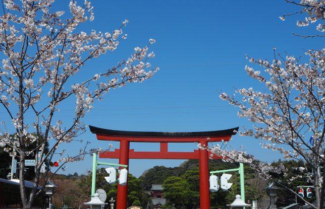 段葛からの三の鳥居と桜