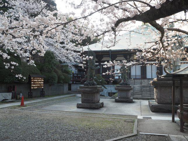 長勝寺境内と桜