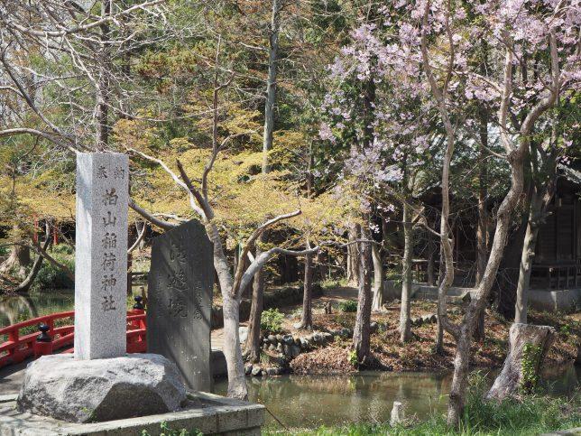 柏山神社の池と桜