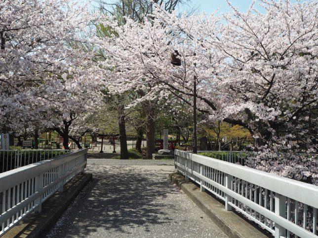 柏山神社のある柏山公園