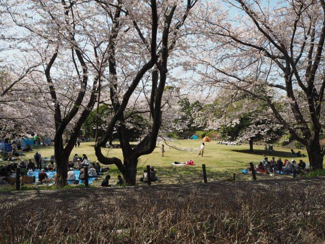 多くの花見客で賑わう大庭城址公園