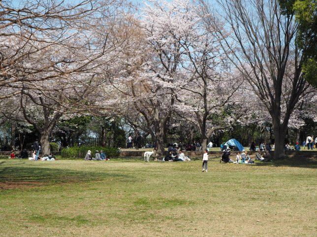 さくらの園と呼ばれる広場