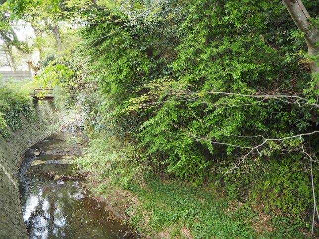 金沢街道に沿って流れる滑川
