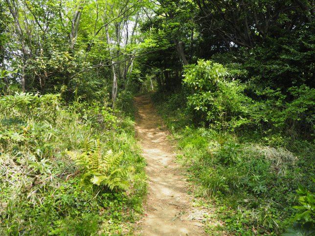 十二所果樹園のハイキングロード