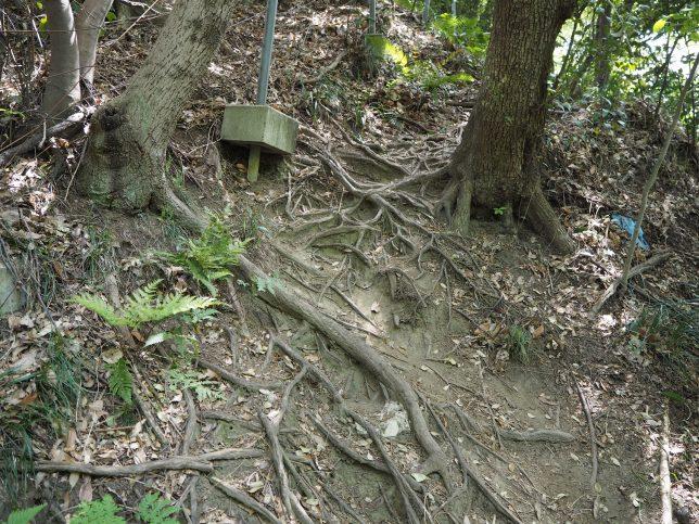 木の根がむきだしになった難所も
