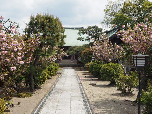 安立寺の八重桜