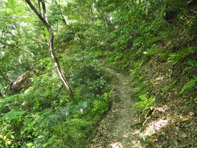 祇園山ハイキングコースを進む