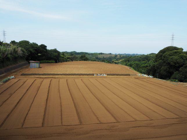 農地が広がる三浦市の風景