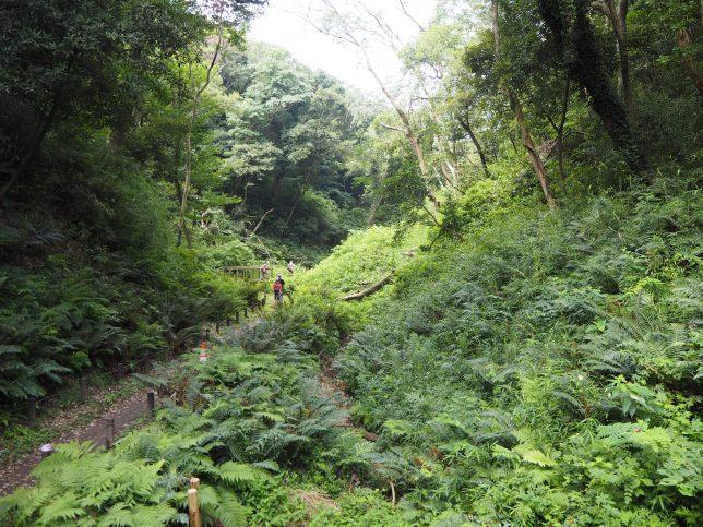 谷に沿って森の中を進む
