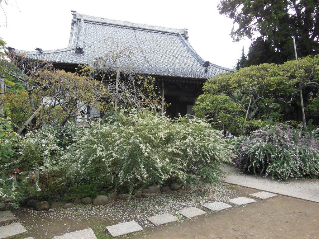 宝戒寺本堂と満開の萩