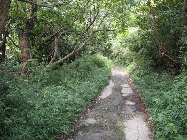 小網代の森への道