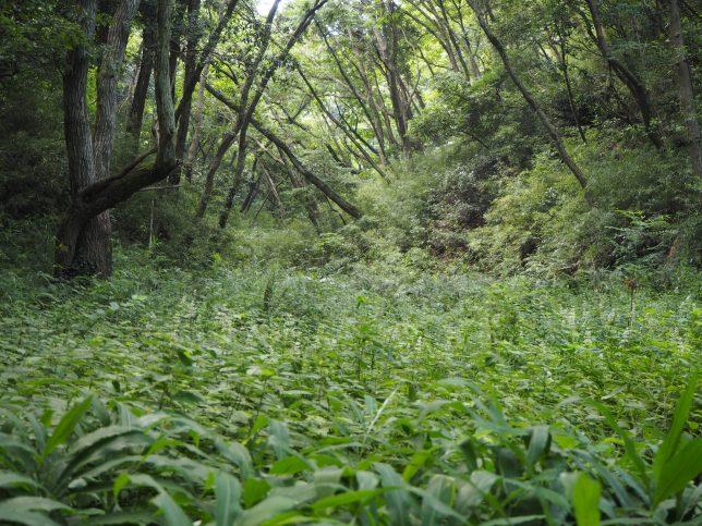 湿地帯には様々な水生植物も自生