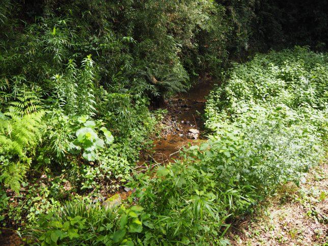 小網代の森の中を流れる浦の川