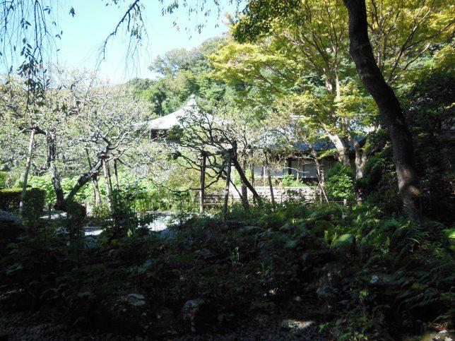 瑞泉寺・本堂前